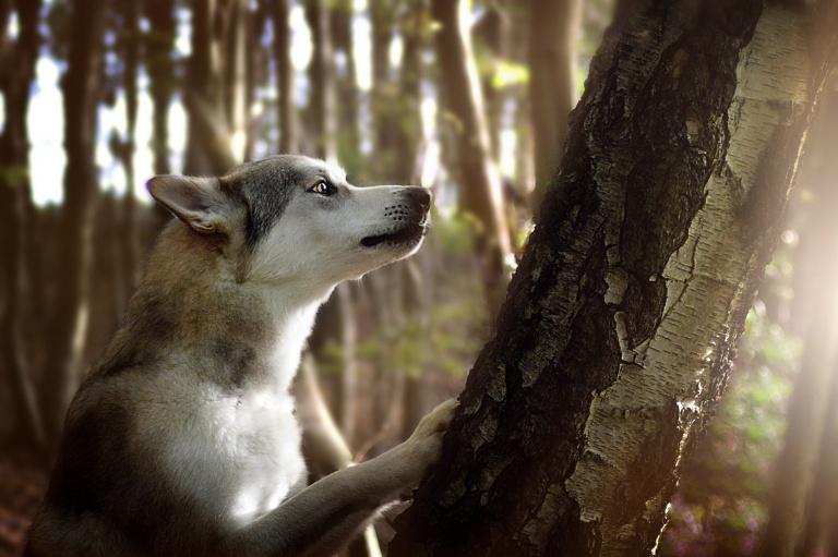 Wolfhund am Baum