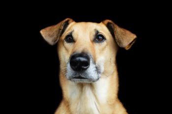 Hundefotografie vor schwarzem Hintergrund - kleiner Hund