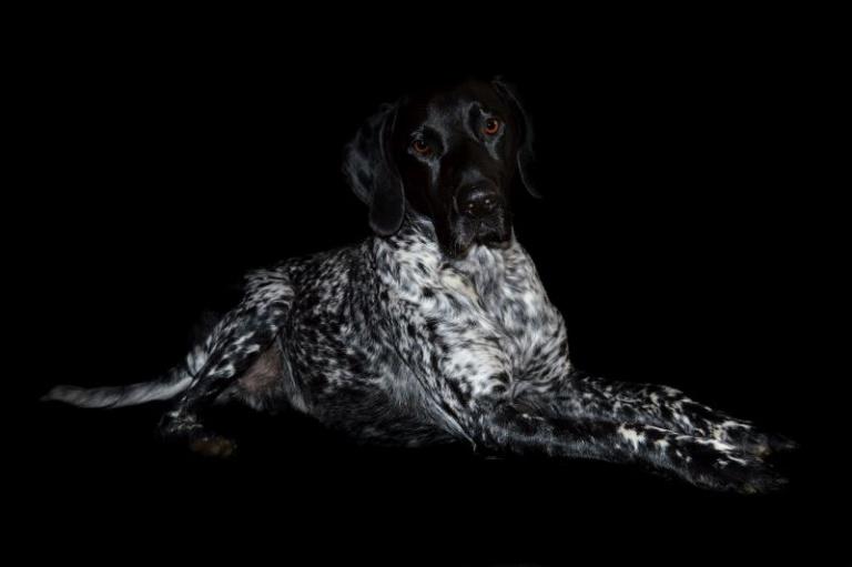 Hundefotografie vor schwarzem Hintergrund - Hund liegend