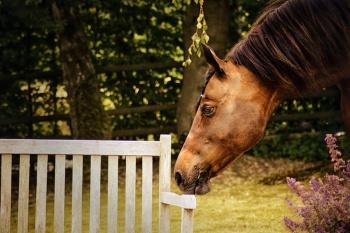 Pferd schnuppert an Bank